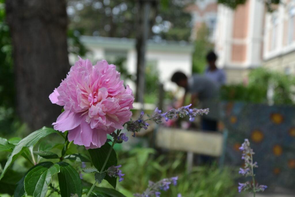Gartentherapie